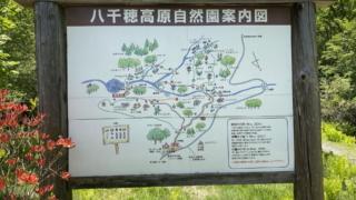 今日のお散歩…八千穂高原自然園