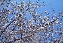 2007年3月29日(木)