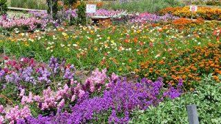 いろいろなお花畑