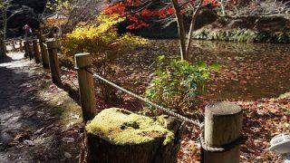 館山の紅葉