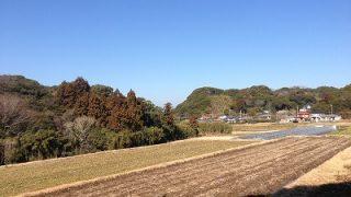 館山と花粉