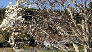 館山のお花いろいろ