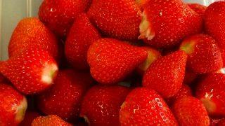 イチゴの館山