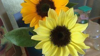 初夏のお花など