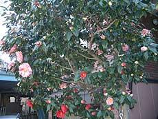 20060321f.jpg