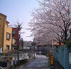 20060329a.jpg