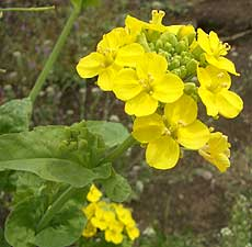 20060415a.jpg