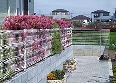 20060416f.jpg