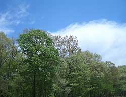 20060421e.jpg