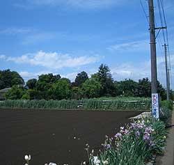 20060520e.jpg