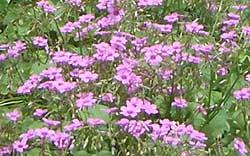 20060624b.jpg
