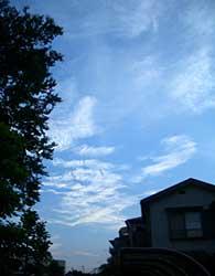 20060819b.jpg