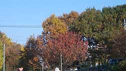 20061202g.jpg